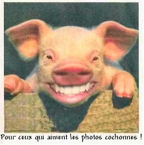 photo de cochonne